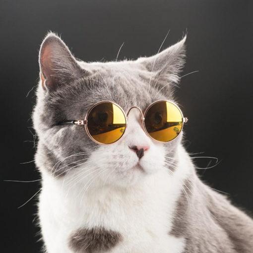 oculos ray ban dourado para cachorros