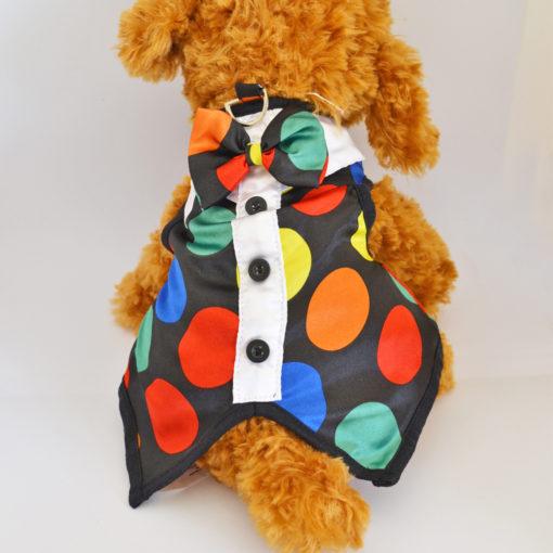 roupa de cachorro colorida