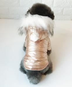 jaqueta metalziada dourada para cachorro