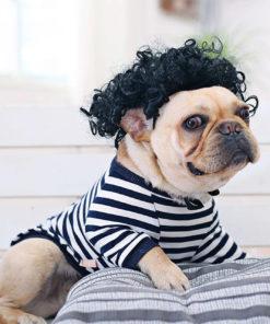 peruca engraçada para cachorro