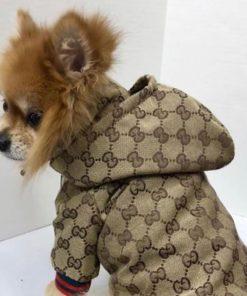 roupa de cachorro bege