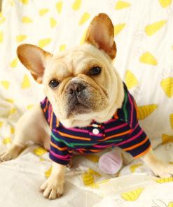 polo listrada colorida para cães