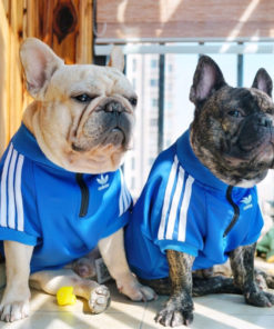 agasalho adidas azul para cachorro