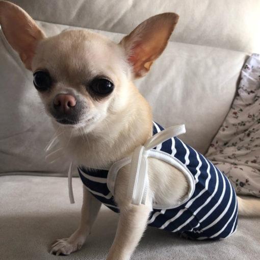 maiô azul marinho para cachorro