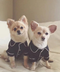 pijama preto e branco para cachorro