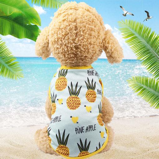 regata de verão abacaxi para cachorro