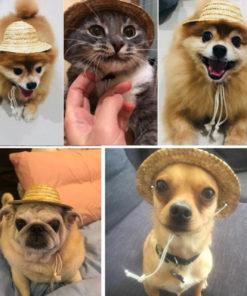 chapéu de palha para cachorro
